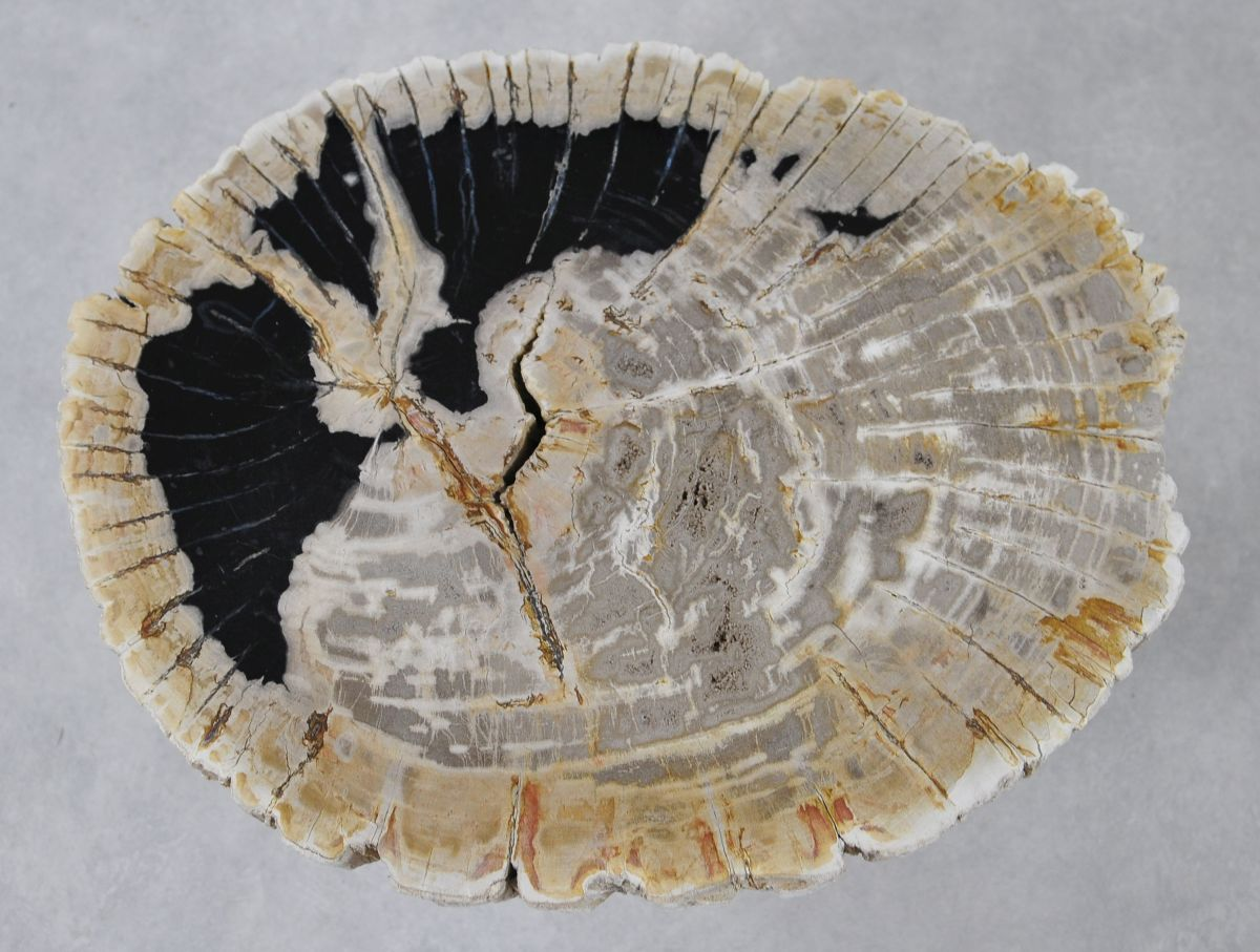 Mesa de centro madera petrificada 36158