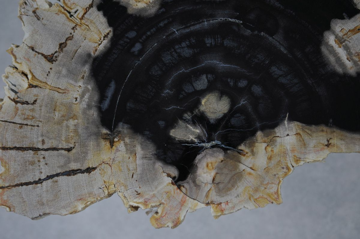 Mesa de centro madera petrificada 36163