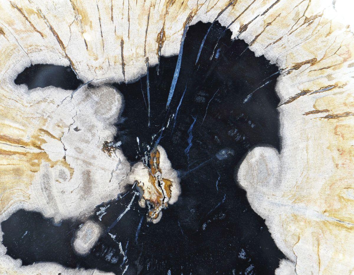 Mesa de centro madera petrificada 36167