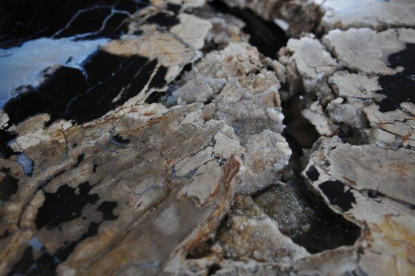 Mesa de centro madera petrificada 36302