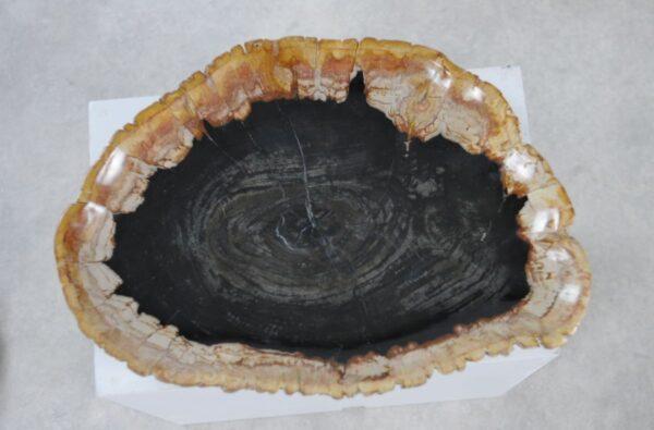 Plate petrified wood 36049a