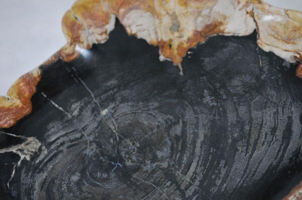 Plate petrified wood 36049c