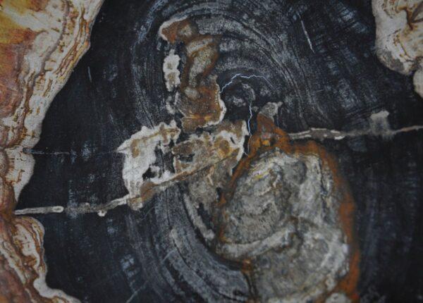 Plate petrified wood 36049e