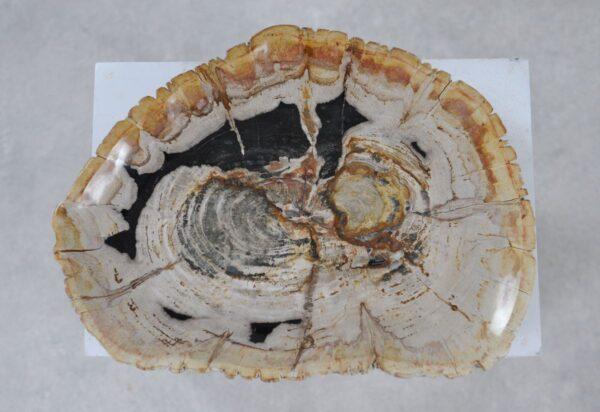 Plate petrified wood 36049g