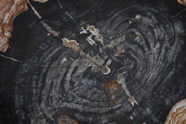 Plate petrified wood 36049j