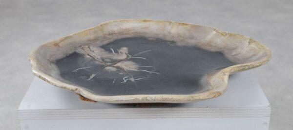 Plate petrified wood 36050c