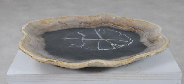 Plate petrified wood 36050d