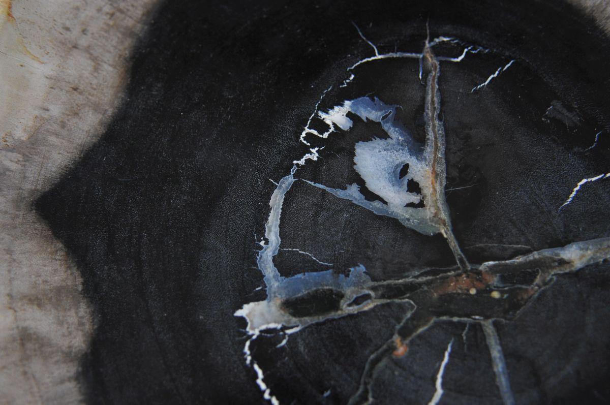 Plate petrified wood 36050e