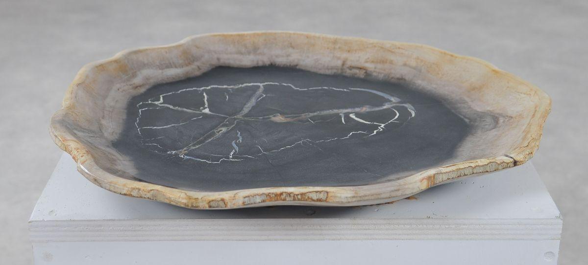 Plate petrified wood 36050f