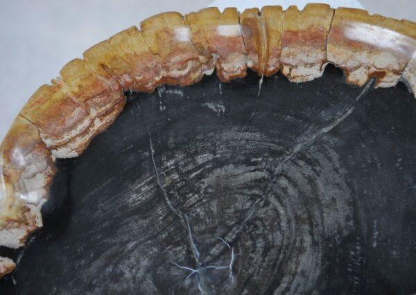 Plato madera petrificada 36049d