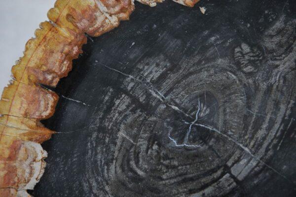 Plato madera petrificada 36049f