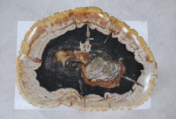 Plato madera petrificada 36049i
