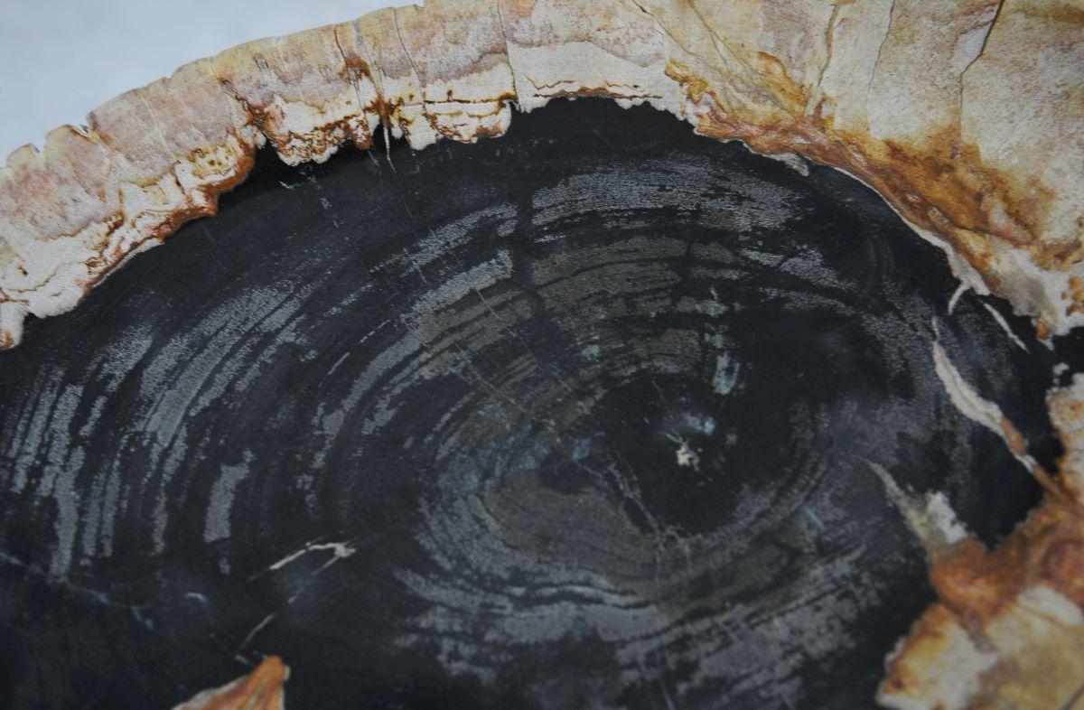 Plato madera petrificada 36049k
