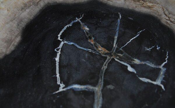 Plato madera petrificada 36050b
