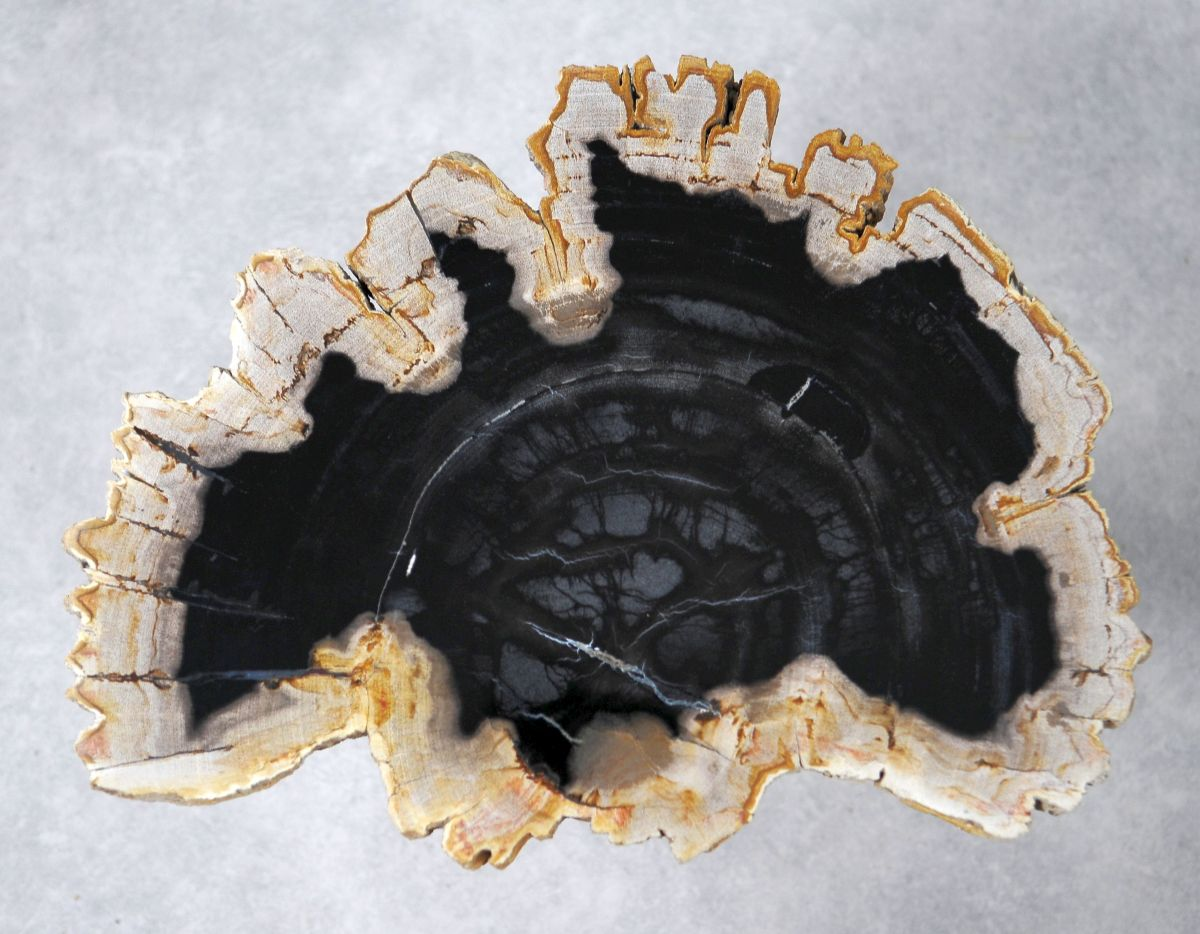 Salontafel versteend hout 36160
