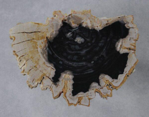 Salontafel versteend hout 36163