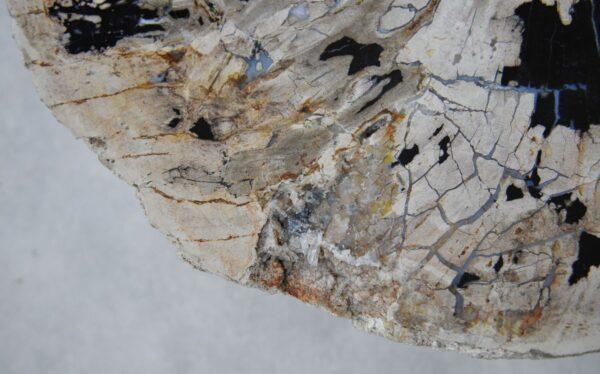 Salontafel versteend hout 36291