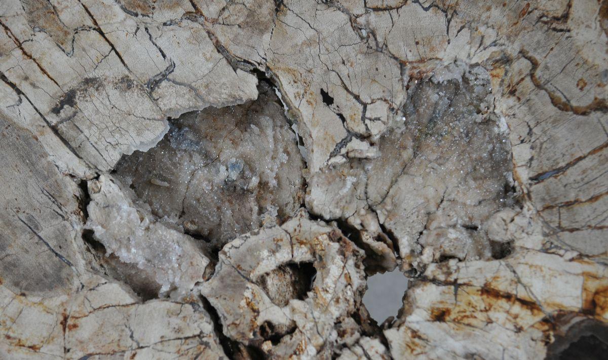 Salontafel versteend hout 36296