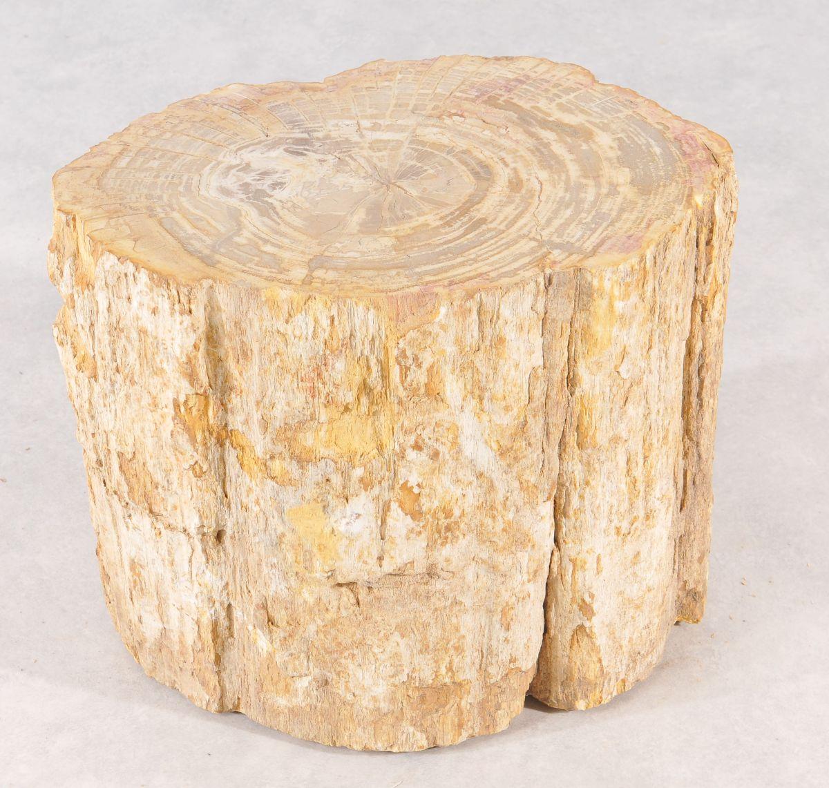 Side table petrified wood 36001