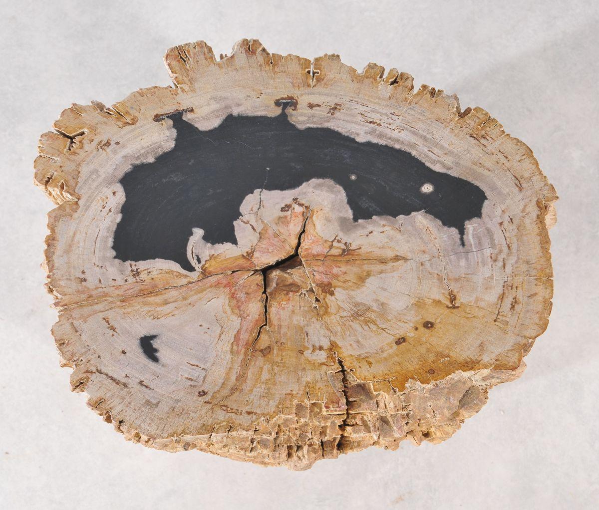 Side table petrified wood 36003