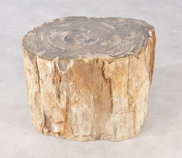Side table petrified wood 36012