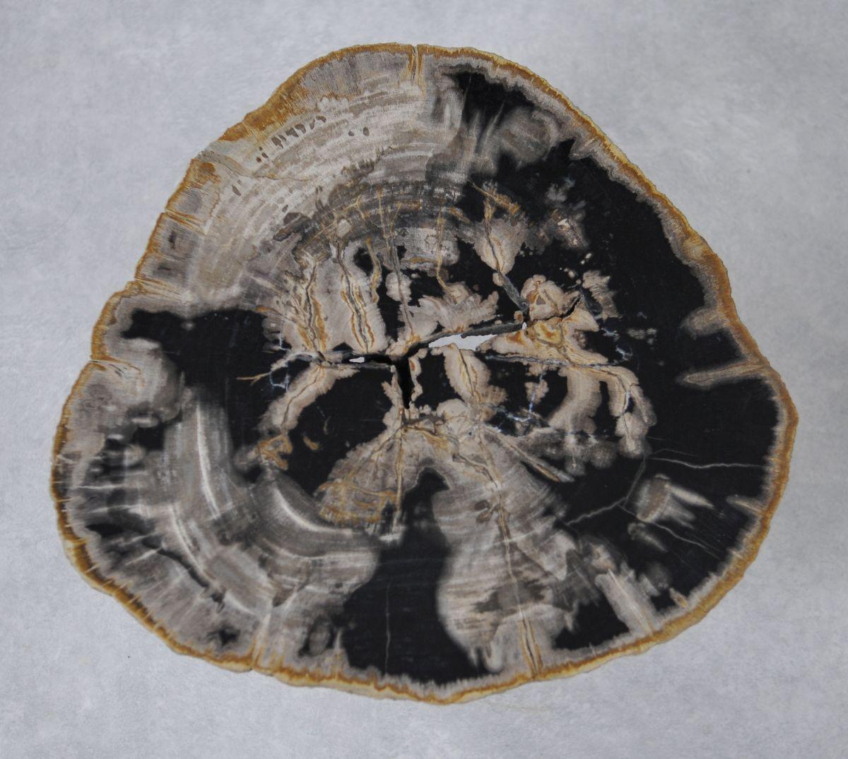 Table basse bois pétrifié 36228