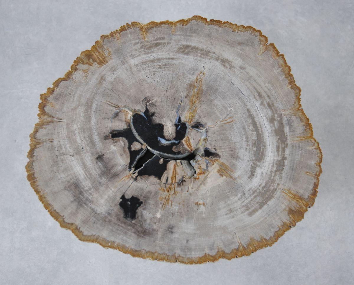 Table basse bois pétrifié 36230