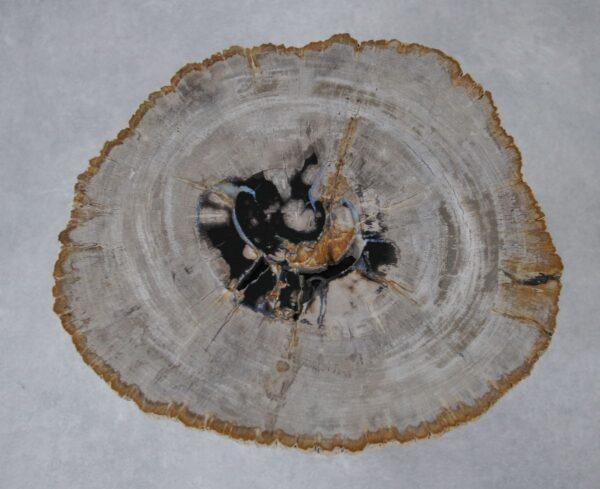 Table basse bois pétrifié 36231