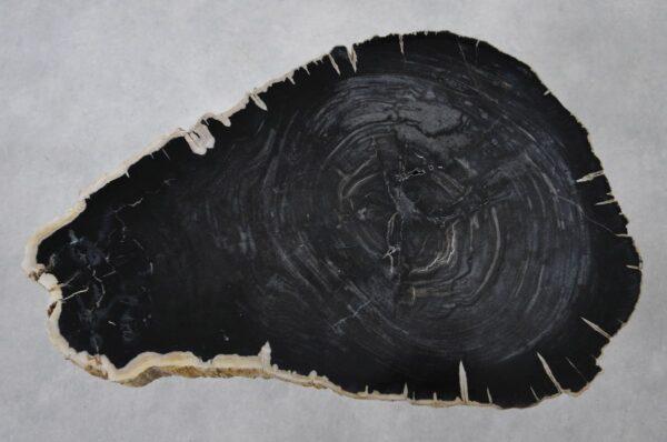 Table basse bois pétrifié 36240