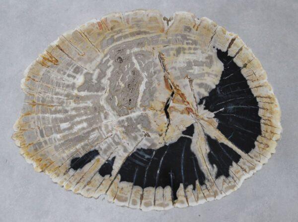 Table basse bois pétrifié 36263