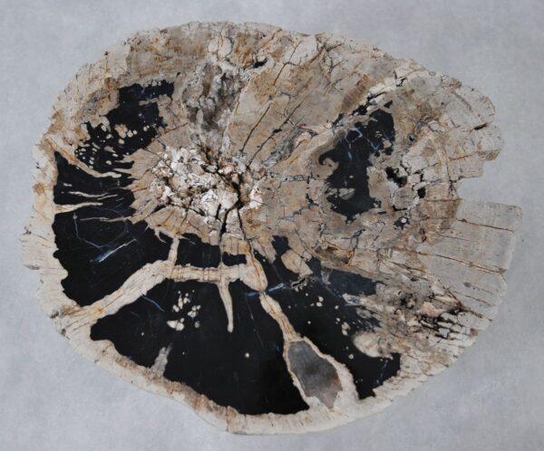 Table basse bois pétrifié 36311