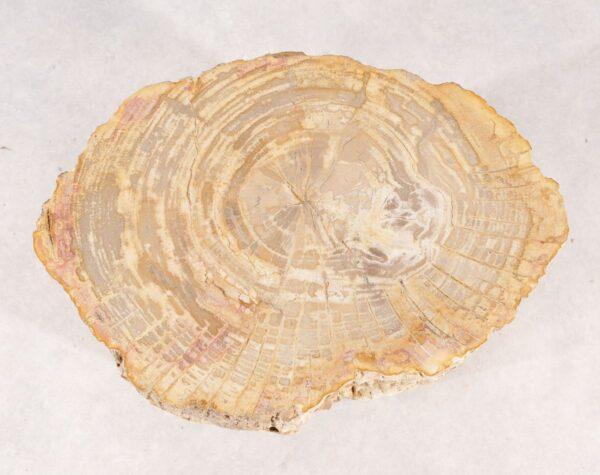 Table d'appoint bois pétrifié 36001