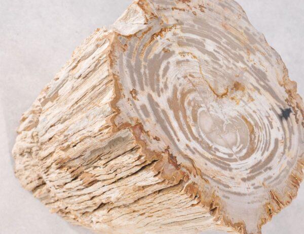 Table d'appoint bois pétrifié 36002