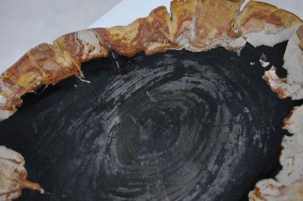Teller versteinertes Holz 36049m
