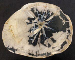 Couchtisch versteinertes Holz 34183