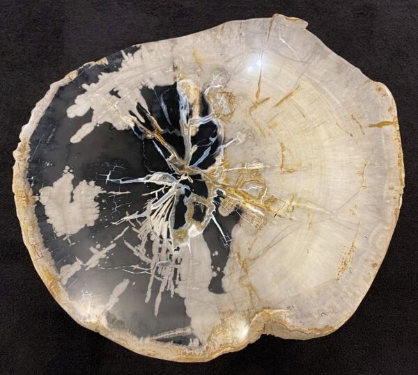 Mesa de centro madera petrificada 34184