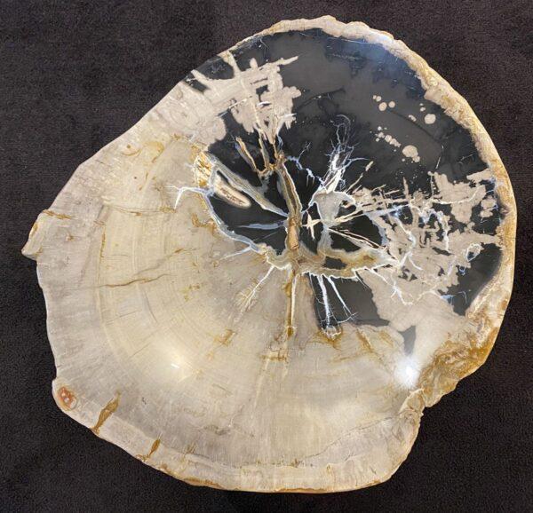 Salontafel versteend hout 34184