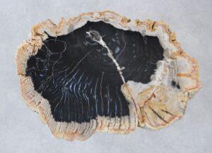Coffee table petrified wood 35206