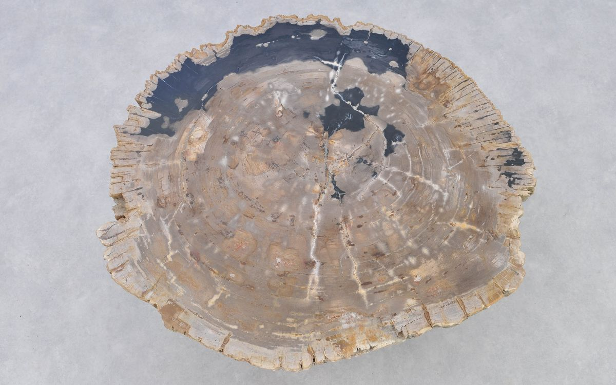 Coffee table petrified wood 37167