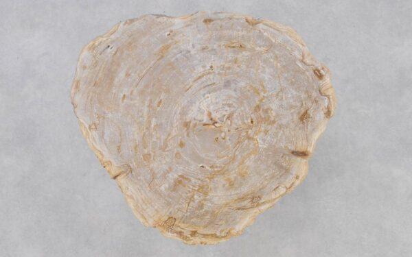 Coffee table petrified wood 37203