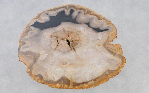 Coffee table petrified wood 37236