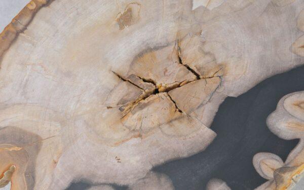 Coffee table petrified wood 37239