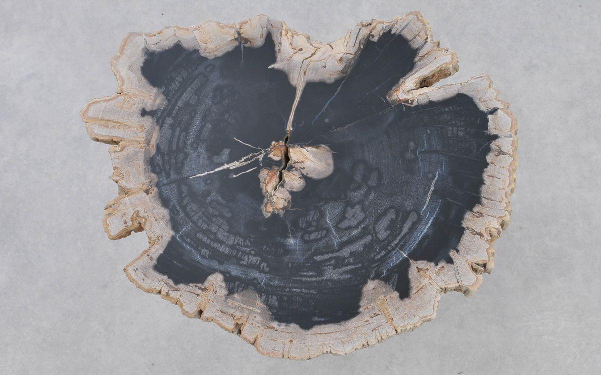 Coffee table petrified wood 37372
