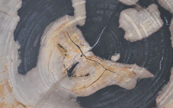 Coffee table petrified wood 37377