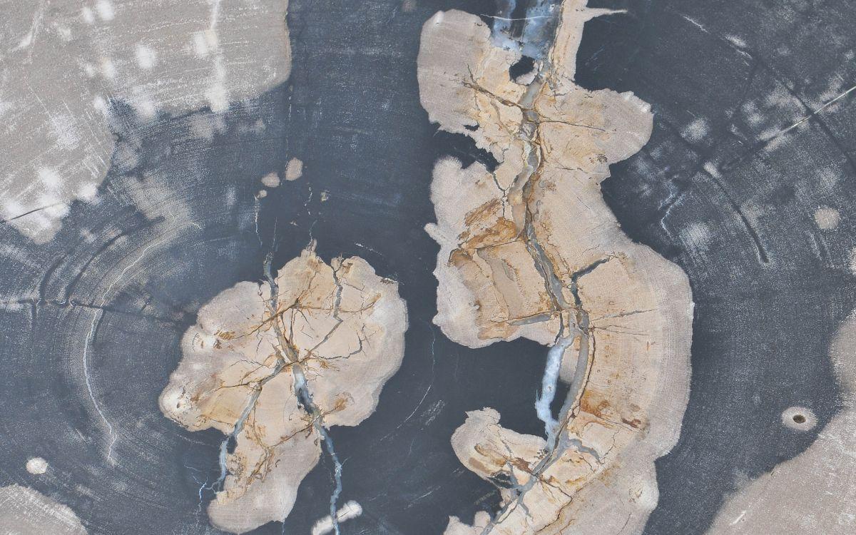 Couchtisch versteinertes Holz 37160
