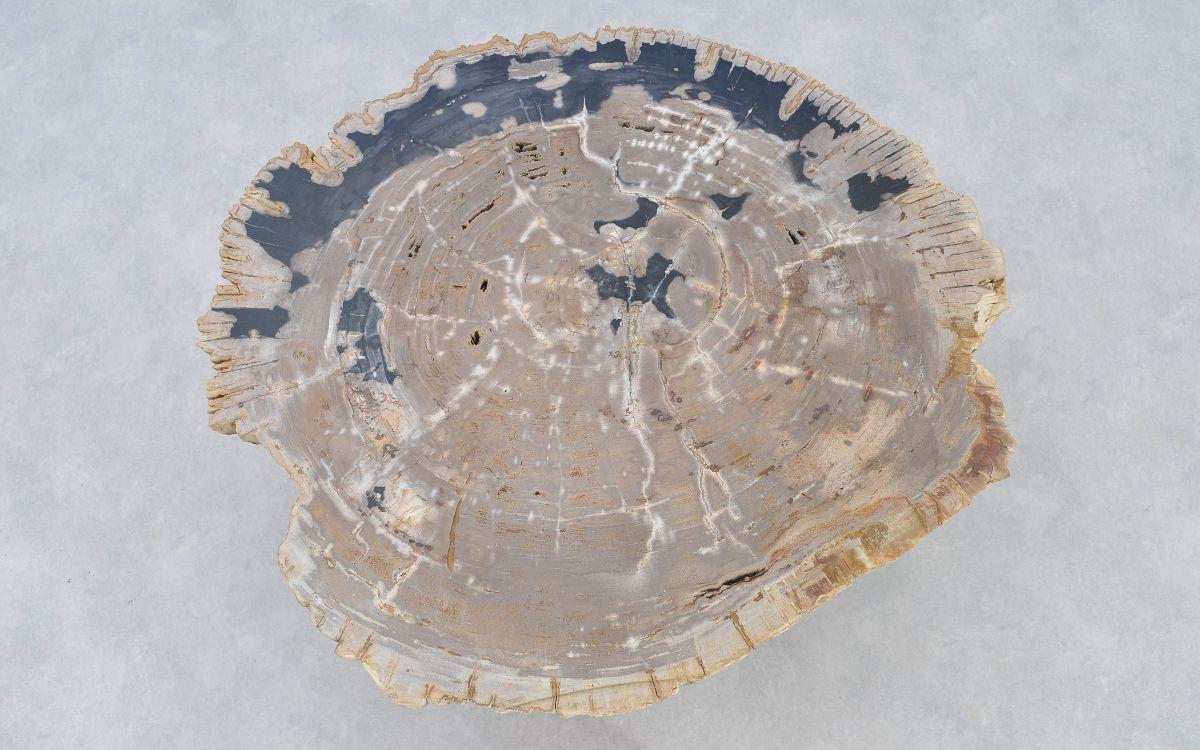 Couchtisch versteinertes Holz 37164