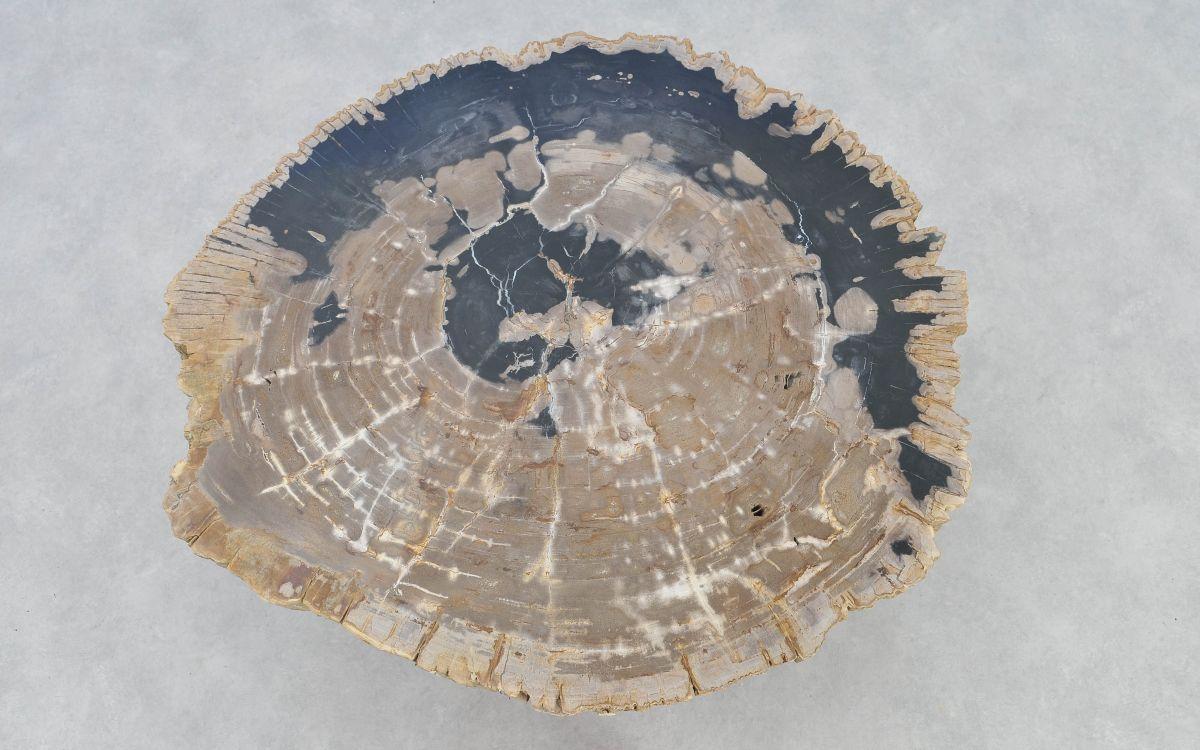 Couchtisch versteinertes Holz 37166