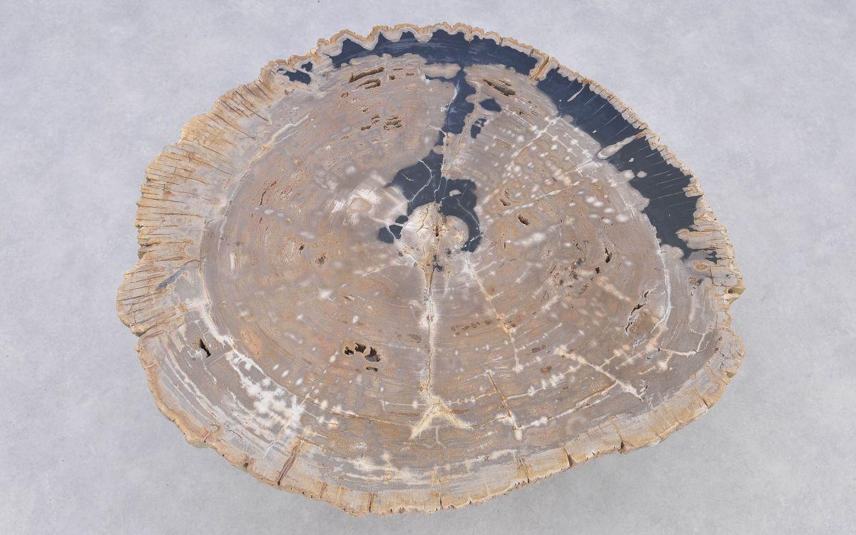 Couchtisch versteinertes Holz 37193