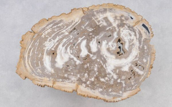 Couchtisch versteinertes Holz 37206