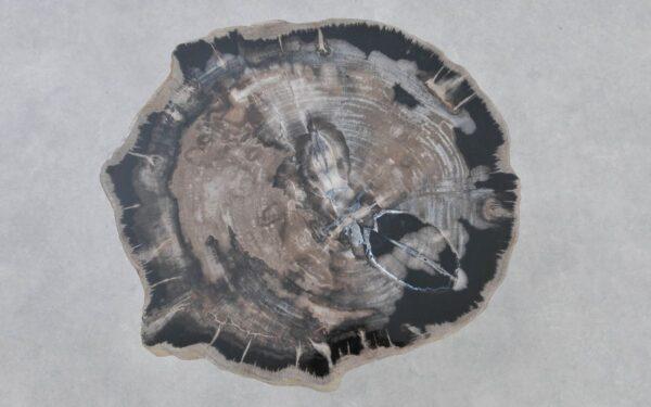 Couchtisch versteinertes Holz 37218
